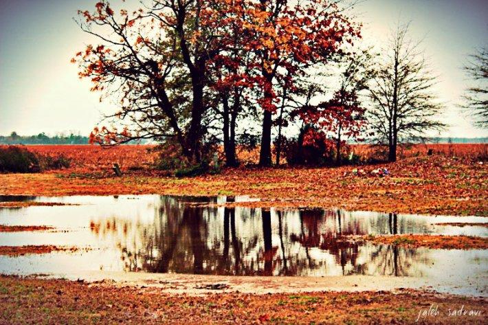 autumnindecemeber_zps0b25899e