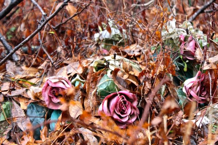roses in leaves