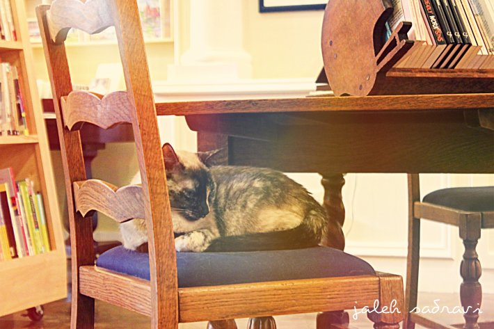 cat bookstore