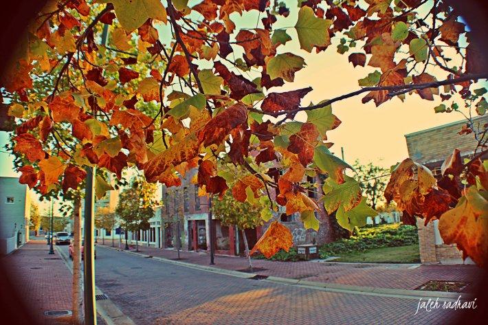 fall leaves farish_final