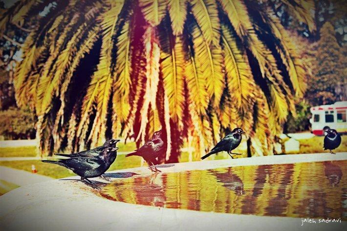 san fran birds fountain