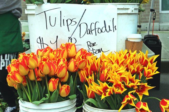 tulips_fremont market