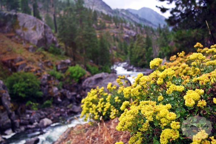 2016.06.25_Leavenworth Yellow Flowers Tiver